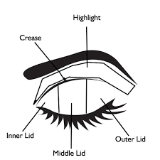 Image result for eyeshadow diagram