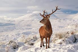Image result for christmas in scotland