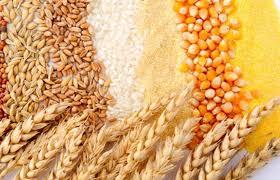 Food Processing के लिए चित्र परिणाम