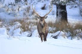 Davagh-<b>Enduro</b> - The Davagh Forest Trails <b>deer</b> on the lough ...