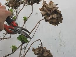 """Résultat de recherche d'images pour """"gifs les hortensias coupés"""""""