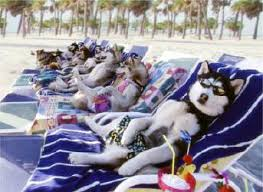 Image result for summer cats and dogs