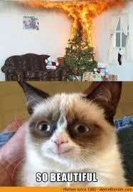 Grumpy Cat - No via Relatably.com