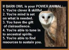 Animal Spirit Guide – The Barn Owl | Balanced Women's Blog