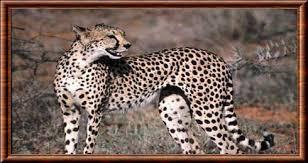 """Résultat de recherche d'images pour """"animaux dans le parc pendjari"""""""