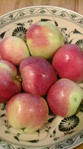 theresa kishkan writer i wrote about the stray apple in my essay euclid s orchard and yesterday john picked its small crop because there s a bear around right now yesterday it