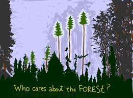 care about the forest heres what you can do  grist who cares about the forest