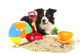 """Résultat de recherche d'images pour """"chien en vacances"""""""