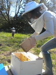 a bee i do become essay julie trimingham num atilde copy ro cinq pouring the colony into the hive