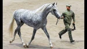 ОРЛОВСКИЙ РЫСАК - лошадь-легенда! #ИППОсфера 2019 ...