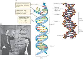 「1953, Nature, francis crick and james watson wrote on DNA」の画像検索結果