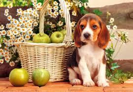 Ξέρετε ποιος είπε:'' Μπάτε σκύλοι αλέστε''...