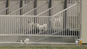KDKA Investigates: Dogs Sold In Western Pennsylvania Traced To ...