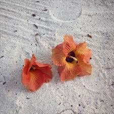 Везде <b>упавшие цветы</b> с деревьев