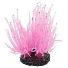 Купить <b>аквариум</b> натуральные <b>кораллы</b> от 271 руб ...