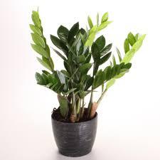 indoor plants low light common houseplants and best indoor plants hgtv best office plants no sunlight