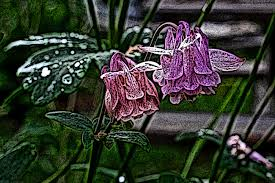 good bye high school my daughter s flowers for algernon speech columbine flowers