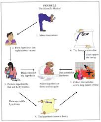 scientific method examplesworld of examples world of examples example of scientific method graphic organizer bqnk2mo9