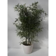 <b>Bamboo</b>, <b>180</b> - 200 cm - SCHEI_0016 | wire 2020