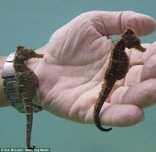 Image result for the seahorse