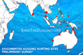 about dugongs save the dugong click here