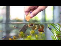 <b>Tetra Fresh Delica</b>: the natural snack - YouTube