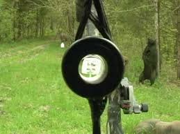 Image result for sight compound bow