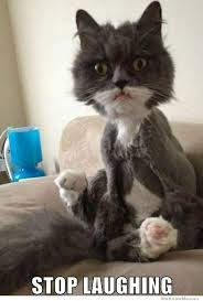 What A Shaved Cat Looks Like | WeKnowMemes via Relatably.com