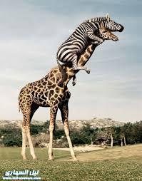 صور مضحكه للحيوانات images?q=tbn:ANd9GcR