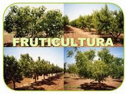 Curso Técnico em Fruticultura