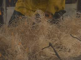 Wind Tunnel Experiments to Study Chaparral Crown Fires | Protocol ...