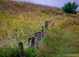 <b>Kansas</b> State <b>Song</b> | Home on the Range