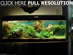 cool home lighting fish tank decorations for your living room ideas idea magz cool design with absolutely nicking lighting idea