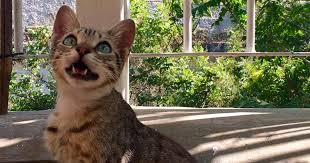 Why Do <b>Cats</b> Chirp? The Reason Behind Those Funny Noises - The ...