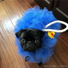 This is a revelation | Companion Animals | <b>Cute pugs</b>, <b>Pugs</b>, <b>Pugs</b> ...