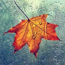 Image result for autumn leaf images