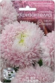 Астра китайская Хризантелла Сакура <b>семена</b>, описание сорта ...