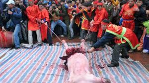 Kết quả hình ảnh cho lễ hội chém lợn ở bắc ninh