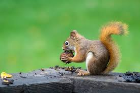 500+ <b>Squirrel</b> Pictures | Download Free Images on Unsplash