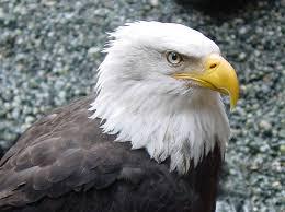 Ποιο πτηνό φημίζεται για την όραση του;