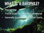 Images & Illustrations of barophile