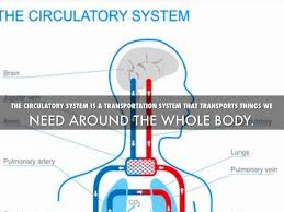parts of transportation circulatory system essay