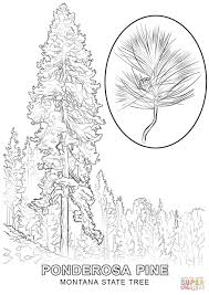 Small Picture Montana State Tree coloring page Free Printable Coloring Pages
