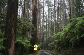 Image result for black spur