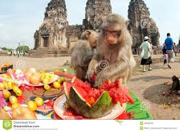 Image result for the monkey festival in thailand