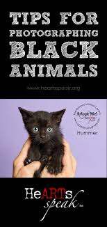 best images about pet adoption marketing ideas rescue photographers don t fear the black fur we have some tips for