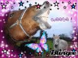 """Résultat de recherche d'images pour """"bonjour les chevaux"""""""