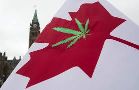 the quest to legalize marijuana in legalize marijuana in 2017