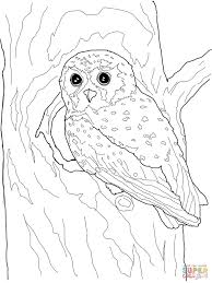 Small Picture Owl Coloring Pages Owl With Rose nebulosabarcom