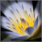 Resultado de imagen de flors de jardi